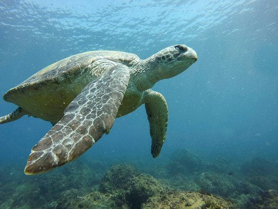 Kingscliff, ออสเตรเลีย: Snorkelling with the Turtles