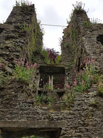 Mallow Castle: 20180610_085932_large.jpg