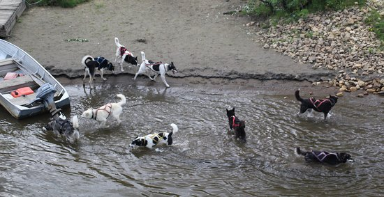 Paseo en barco por el descubrimiento: Butcher dogs play in the water after a dog team demonstration