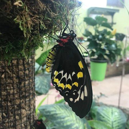 Bilde fra Joseph L. Popp, Jr. Butterfly Conservatory