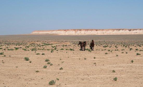 Balkanabat, Turkmenistan: Horses in the Desert