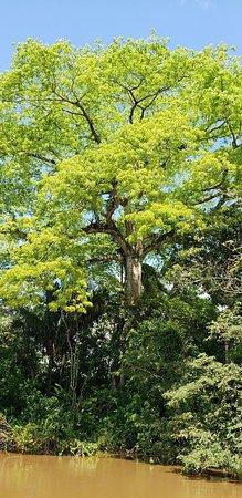 Cano Negro, Costa Rica: 20180612_120701_large.jpg