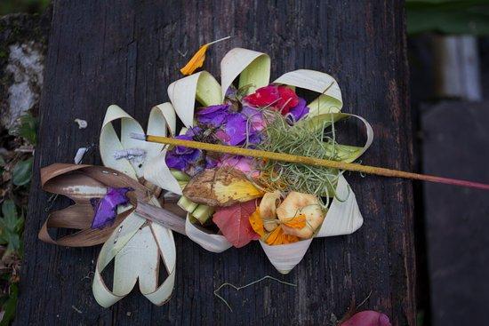 Umajati Retreat: Daily offering