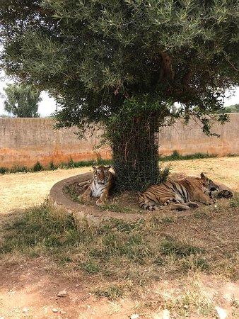 Сафари зоопарк: Lazy