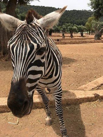 Сафари зоопарк: A friend