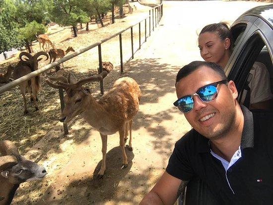Сафари зоопарк: Passing through