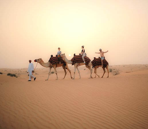 Dubaï, Émirats arabes unis : Enjoy a camel ride in the Dubai desert
