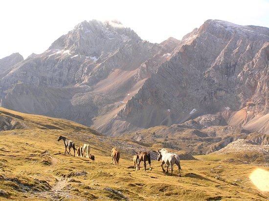 Malga Rossalm: wunderschöne Pferde