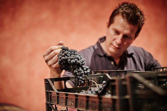Montonale: Selezioniamo solo i migliori grappoli per assicurare la migliore qualità