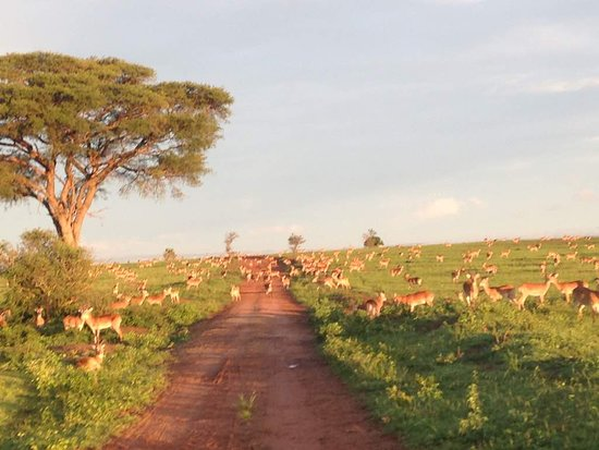 Bowi Africa Tours And Travel: Uganda kobs