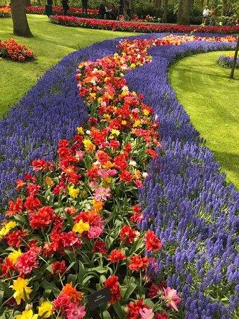 Lovely Keukenhof Gardens 5