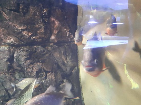 "Oceanarium Sea Fairy Tale: Океанариум ""Морская сказка"""