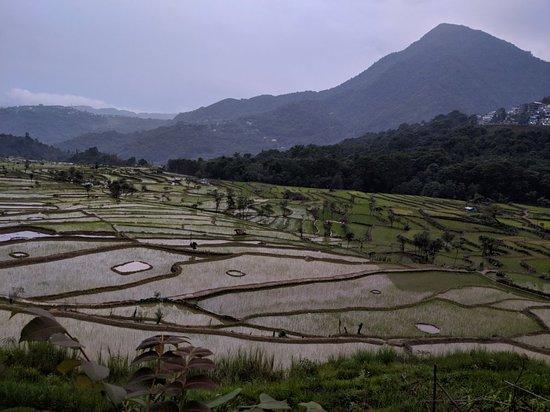 Kohima District, India: IMG_20180614_180635_large.jpg