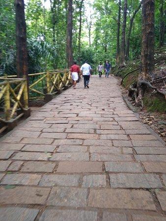 Athirapalli Water Falls: Monsoon