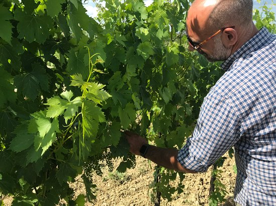 Enoteca Croce Di Febo Biologica: Maurizio telling us about their planting and growing style
