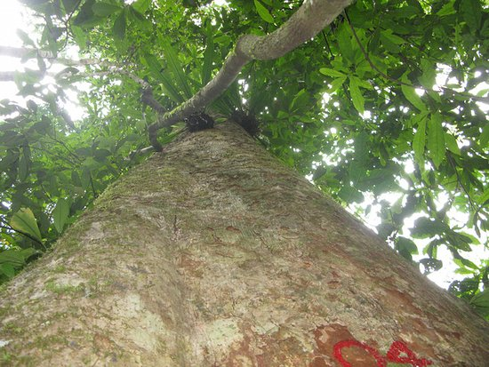 Ethnic Voyage - Day Cruise: Pu Mat Natural Park - Nghe An