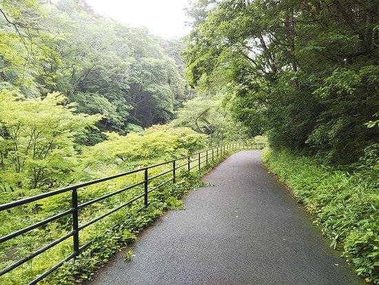 Dainohara Forest Park