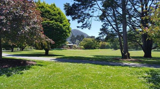斯翠賓植物園舊金山植物園