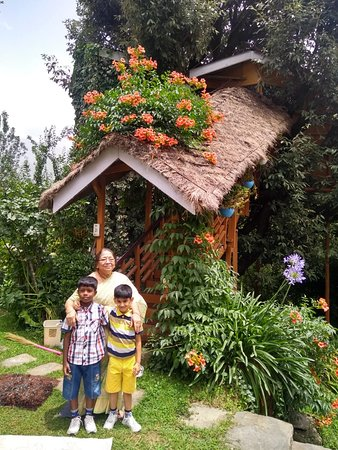 Tree House Cottages: Grand Ma and the Grandchildren