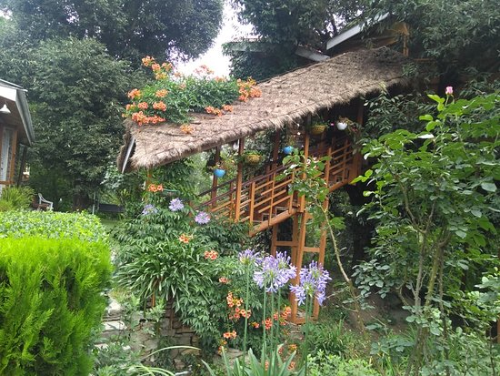 Tree House Cottages: The Tree House Cottage