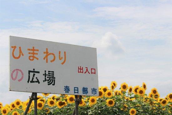 Kasukabe 1st Children Center Angel Dome: エンゼル・ドームの周りが、夏はひまわりの広場になります