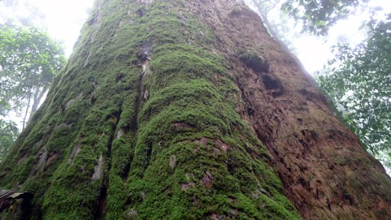 Ethnic Voyage Vietnam: Pu Mat Natural Park - Nghe an