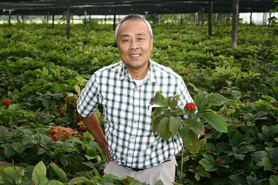 Wausau, WI: Paul Hsu posing among his ginseng gardens