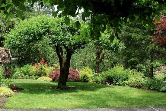 Landscape - Picture of Steamboat Inn, Idleyld Park - Tripadvisor