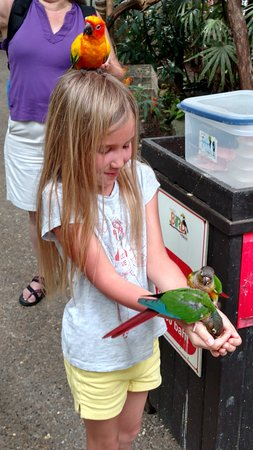 Phuket Bird Paradise: Вольер с попугаями