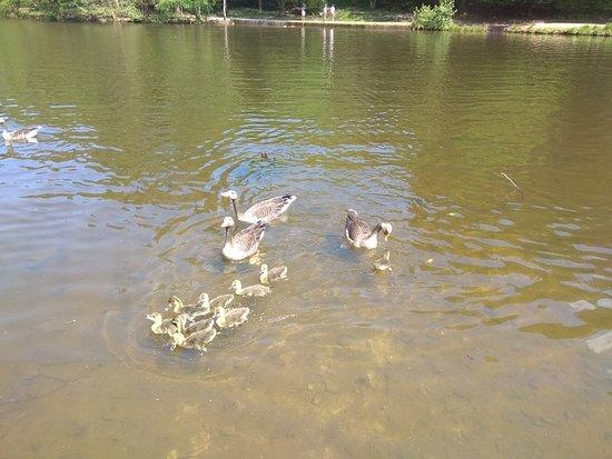 Mallards Pike Lake: IMG_20180520_132044_large.jpg