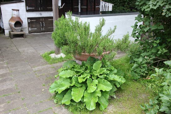Rogeri Hindsholm: Various herbs are used for the authentic smoked meat.