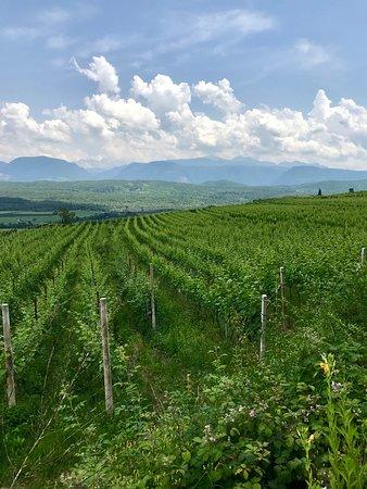 Centro Storico Caldaro sulla Strada del Vino: Strada dei vini