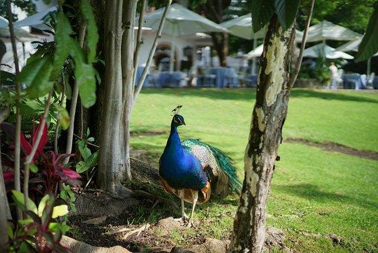 Club de Golf de Cuernavaca: Campo de Golf