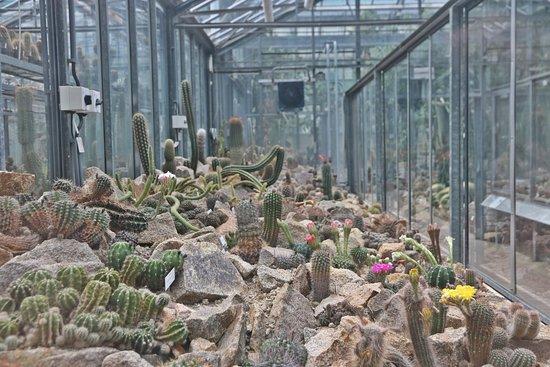 Botanical Garden of the Department of Charles University: Prag - Botanical Garden 7