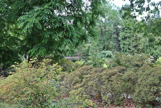 Botanical Garden of the Department of Charles University: Prag - Botanical Garden 8