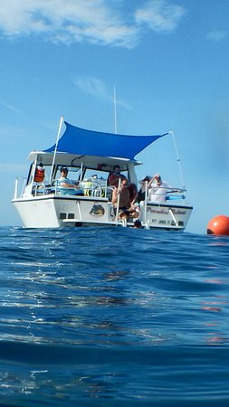 Paradise Island Charters: Warm waters, for snorkeling at Key Largo Florida