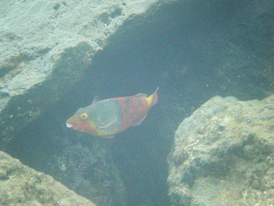 Lanzarote Non Stop Divers: Fishfabulous time :)