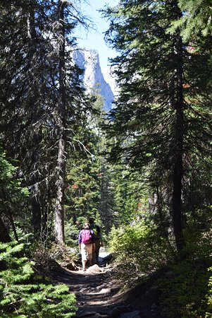 Cascade Canyon Trail: Lots of pine trees for shade