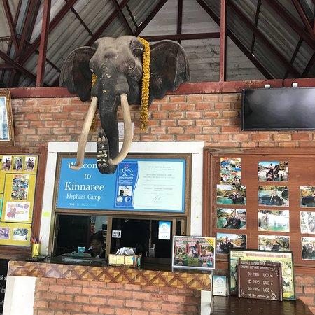 Kinnaree Elephant Trekking Tours: photo2.jpg