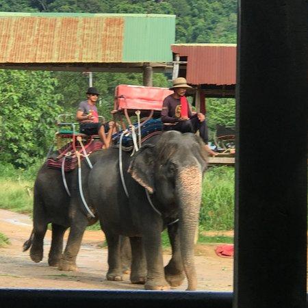 Kinnaree Elephant Trekking Tours: photo3.jpg