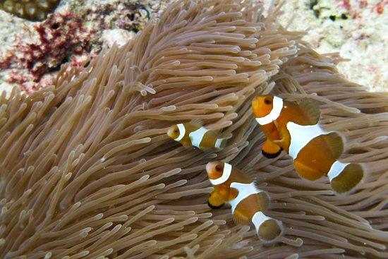 ProFun Divers: Nemo!
