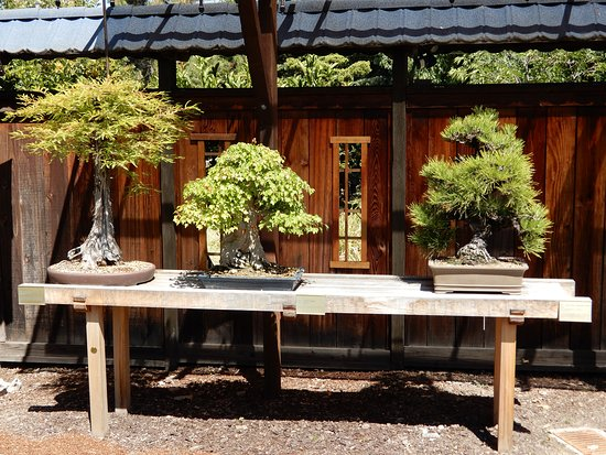 Bonsai On New Benches And Windows Picture Of Gsbf Bonsai Garden At Lake Merritt Oakland Tripadvisor
