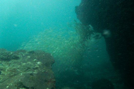 ProFun Divers: Schools!