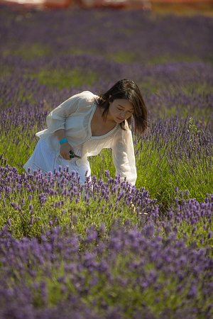 Purple Haze Lavender Farm 사진