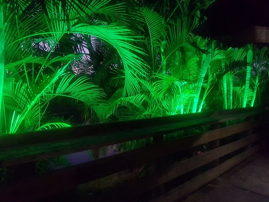 The New Nadi Farmers Club: Night palms in the river side garden