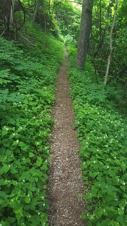 Schoolhouse Gap Trail