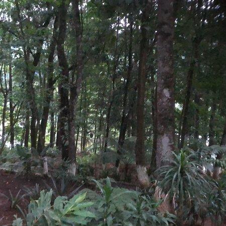 Alta Verapaz Department, Guatemala: photo1.jpg