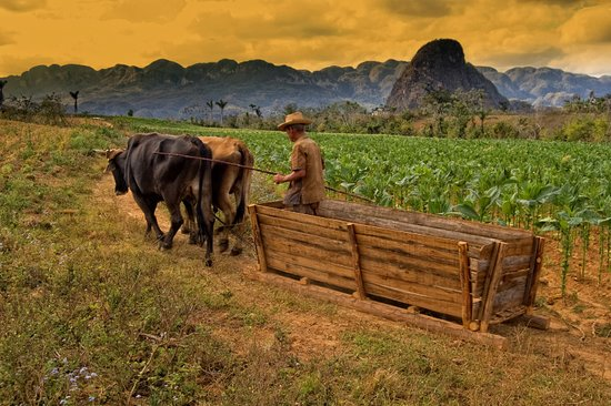 Riding Vinales: Farmer Viñales.