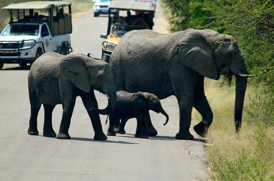 Kruger National Park 2 Tage 1 Nacht...