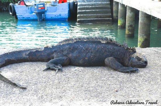 12 Days Galapagos Island Hopping...